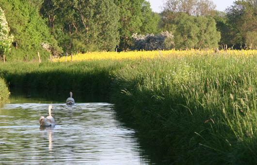 Foto: Landschaft in Petershagen